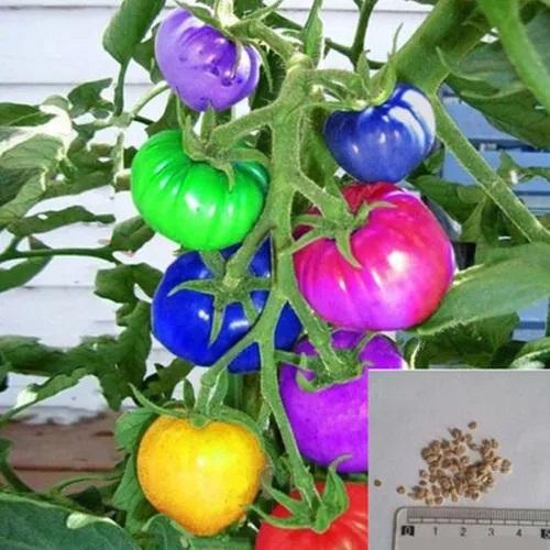 10 броя семена от Домати с различен цвят